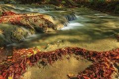 A folha e a montanha bonitas do outono fluem na floresta Fotos de Stock Royalty Free