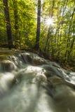 A folha e a montanha bonitas do outono fluem na floresta Imagens de Stock