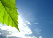 Folha e nuvens Fotografia de Stock