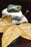 Folha e pedra secadas Foto de Stock Royalty Free