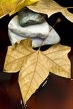 Folha e pedra secadas Imagens de Stock