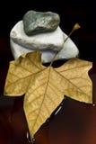 Folha e pedra secadas Fotografia de Stock
