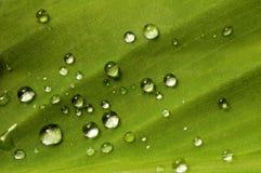 Folha e pingos de chuva Imagem de Stock Royalty Free