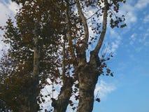 Folha e ramos no close-up fotos de stock