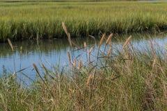 Folha e região pantanosa no ponto da casa do prazer em Virginia Beach foto de stock royalty free