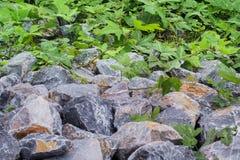 Folha e rocha em Tailândia foto de stock