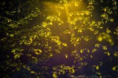Folha e sol da mola imagens de stock royalty free