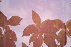 Folha e textura atrás da exposição dobro Foto de Stock