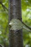 Folha em um tronco de árvore Imagem de Stock Royalty Free
