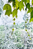 Folha em uma cachoeira Imagens de Stock