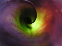 Folha espiral torcida Fotos de Stock