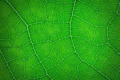Folha Fechada-acima da cor verde Fotos de Stock