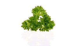 Folha fresca da salsa isolada fotografia de stock