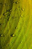 Folha húmida Fotografia de Stock