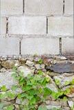 Folha heart-shaped de escalada da hera na parede de tijolo foto de stock royalty free