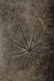 Folha imprimida na terra do cimento Imagens de Stock