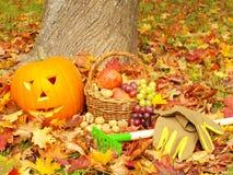 Folha, luvas de jardinagem, ancinhos, frutas e tocha Fotos de Stock