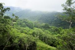 A folha luxúria, tropical sob uma cobertura da nebulosidade faz a Monteverde uma paisagem idílico imagem de stock