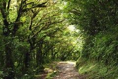 A folha luxúria, verde cerca as fugas de caminhada numerosas na floresta da nuvem de Monteverde em Costa Rica imagem de stock