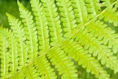 Folha modelada verde Fotografia de Stock Royalty Free