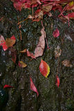 Folha molhada Foto de Stock