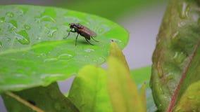 Folha molhada com uma mosca video estoque