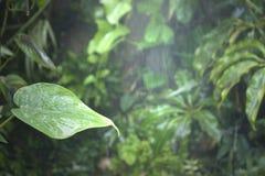 Folha molhada da água tropical da floresta húmida Imagem de Stock