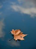 Folha na água (poça) Imagem de Stock Royalty Free