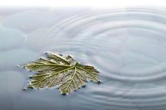 Folha na água sobre pedras com ondinhas fotografia de stock royalty free