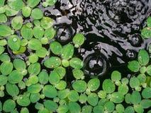 Folha na bolha pequena da água Imagens de Stock