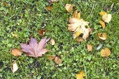 Folha na grama Foto de Stock