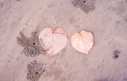 Folha na praia Foto de Stock Royalty Free