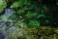 Folha na superfície Foto de Stock