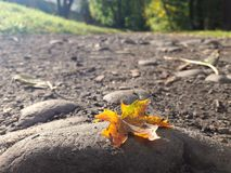 Folha na terra Fotos de Stock
