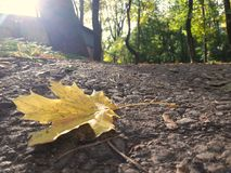 Folha na terra Foto de Stock