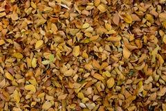 Folha na terra Fotografia de Stock