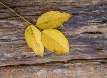 Folha na textura de madeira velha da prancha Fotos de Stock