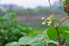 Folha natural da flor da grama do cenário Imagem de Stock