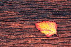 folha no fundo de madeira Fotografia de Stock