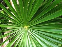 Folha nos trópicos Imagem de Stock Royalty Free