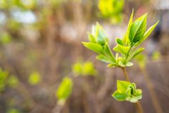 Folha nova verde da mola imagens de stock