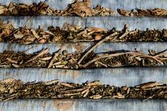 Folha ondulada coberta com os galhos e a avelã Fotos de Stock