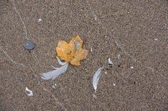 Folha, pena, areia Foto de Stock