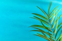 Folha pontudo da palmeira na luz Painted - fundo azul da parede Escapes brilhantes da luz solar da manhã Cores pastel funky do es Fotos de Stock