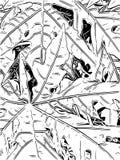 Folha preto e branco Imagens de Stock Royalty Free
