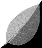 A folha preto e branco abstrata veia o esqueleto Imagens de Stock