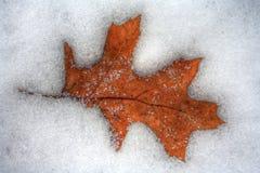 Folha que derrete na neve fria gelada do inverno Fotografia de Stock