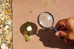 Folha queimada pela lente convexa imagem de stock