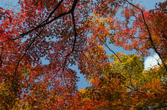 A folha sae da árvore Foto de Stock Royalty Free