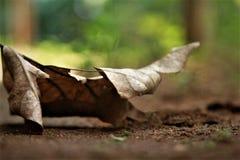 Folha seca imagem de stock